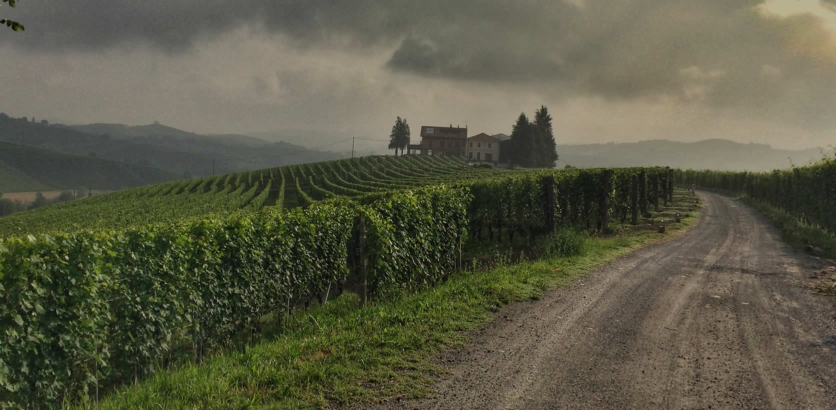 Winery in Barolo